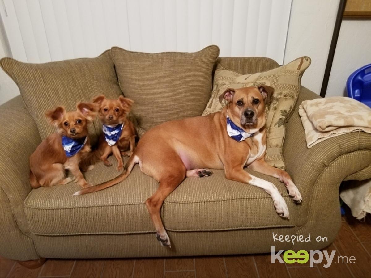 My pups!