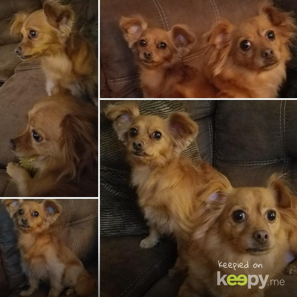 Bub's best pups! » Keepy.me