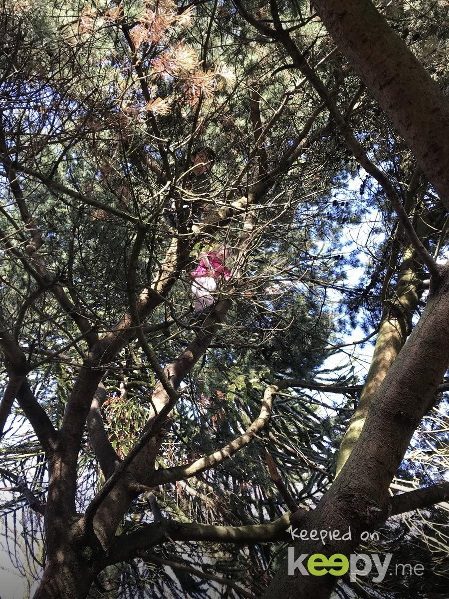 Tree climbing fun » Keepy.me