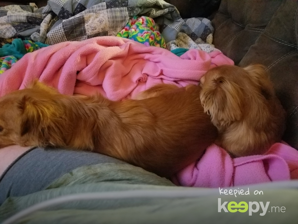 pups on quarantine » Keepy.me